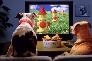 dogs watch tv2